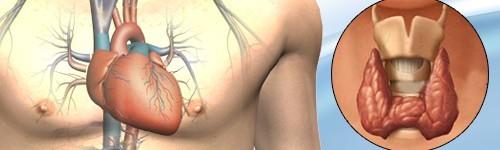 Сърце и щитовидна жлеза