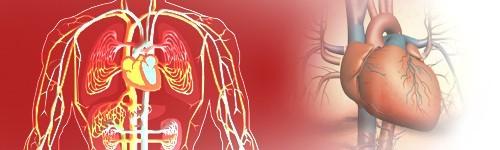 За подобряване на кръвообръщението