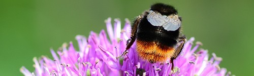 Алергии и сенна хрема